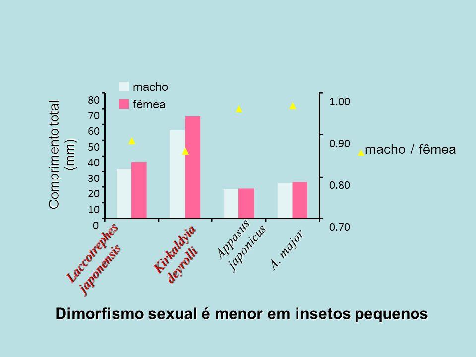 0.70 0.80 0.90 1.00 0 10 20 30 40 50 60 70 80 macho fêmea macho fêmea Laccotrephes japonensis Kirkaldyia deyrolli Appasus japonicus A. major Comprimen