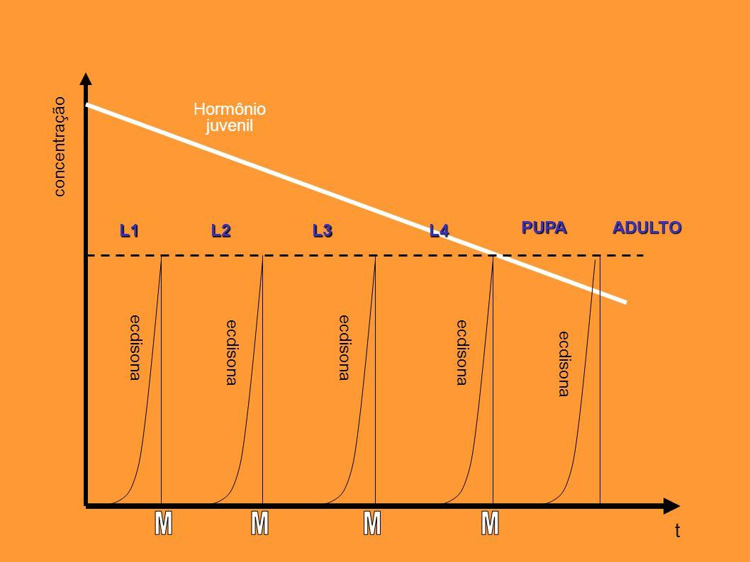 L1L2L3L4 PUPAADULTO t Hormônio juvenil ecdisona concentração