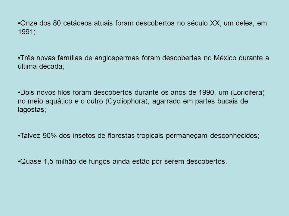 Onze dos 80 cetáceos atuais foram descobertos no século XX, um deles, em 1991; Três novas famílias de angiospermas foram descobertas no México durante a última década; Dois novos filos foram descobertos durante os anos de 1990, um (Loricifera) no meio aquático e o outro (Cycliophora), agarrado em partes bucais de lagostas; Talvez 90% dos insetos de florestas tropicais permaneçam desconhecidos; Quase 1,5 milhão de fungos ainda estão por serem descobertos.