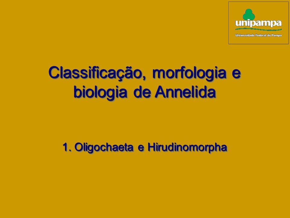 Classificação, morfologia e biologia de Annelida Classificação, morfologia e biologia de Annelida 1. Oligochaeta e Hirudinomorpha