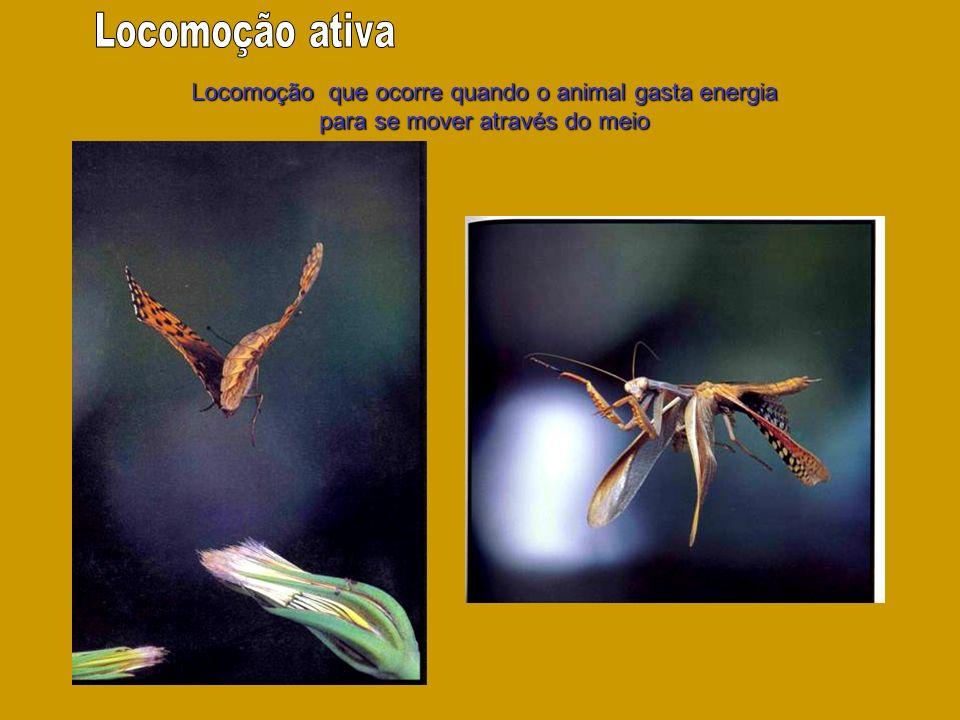 Locomoção que ocorre quando o animal gasta energia para se mover através do meio