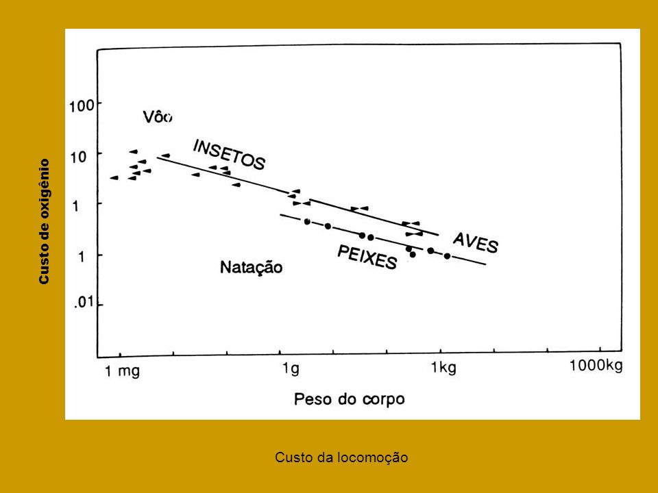 Número de Reynolds (Re), adimensional Número de Reynolds (Re), adimensional Re = velocidade x dimensão viscosidade cinemática viscosidade cinemática Re alto=>forças viscosas ignoradas Re baixo=>forças viscosas predominam 1) Em ambientes aquáticos, o Re baixo indica que o meio oferece muita resistência devido à viscosidade.