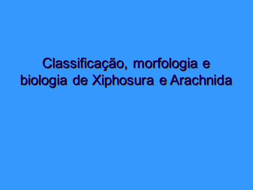 Classificação, morfologia e biologia de Xiphosura e Arachnida Classificação, morfologia e biologia de Xiphosura e Arachnida