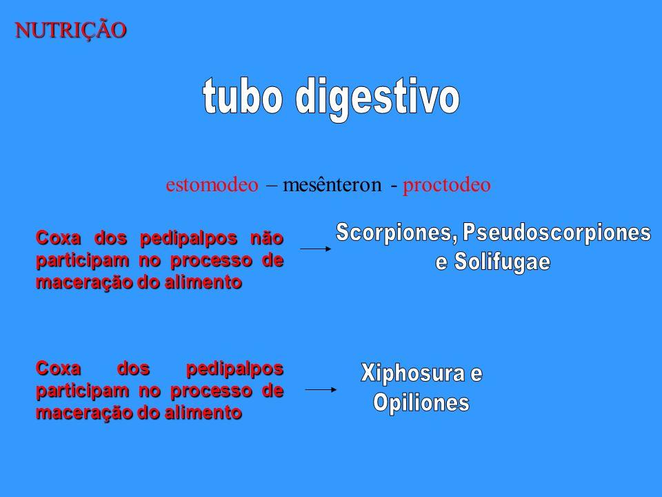 NUTRIÇÃO estomodeo – mesênteron - proctodeo Coxa dos pedipalpos não participam no processo de maceração do alimento Coxa dos pedipalpos participam no