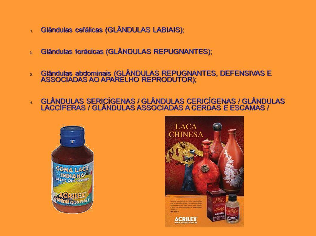 1. Glândulas cefálicas (GLÂNDULAS LABIAIS); 2. Glândulas torácicas (GLÂNDULAS REPUGNANTES); 3. Glândulas abdominais (GLÂNDULAS REPUGNANTES, DEFENSIVAS