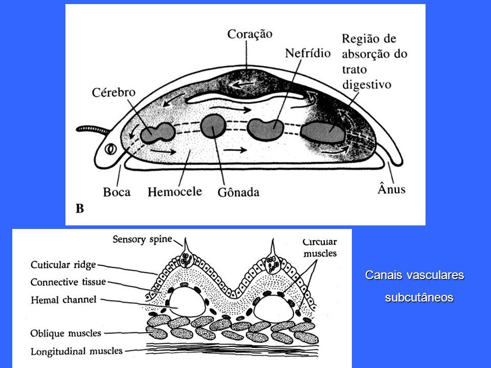 Canais vasculares subcutâneos