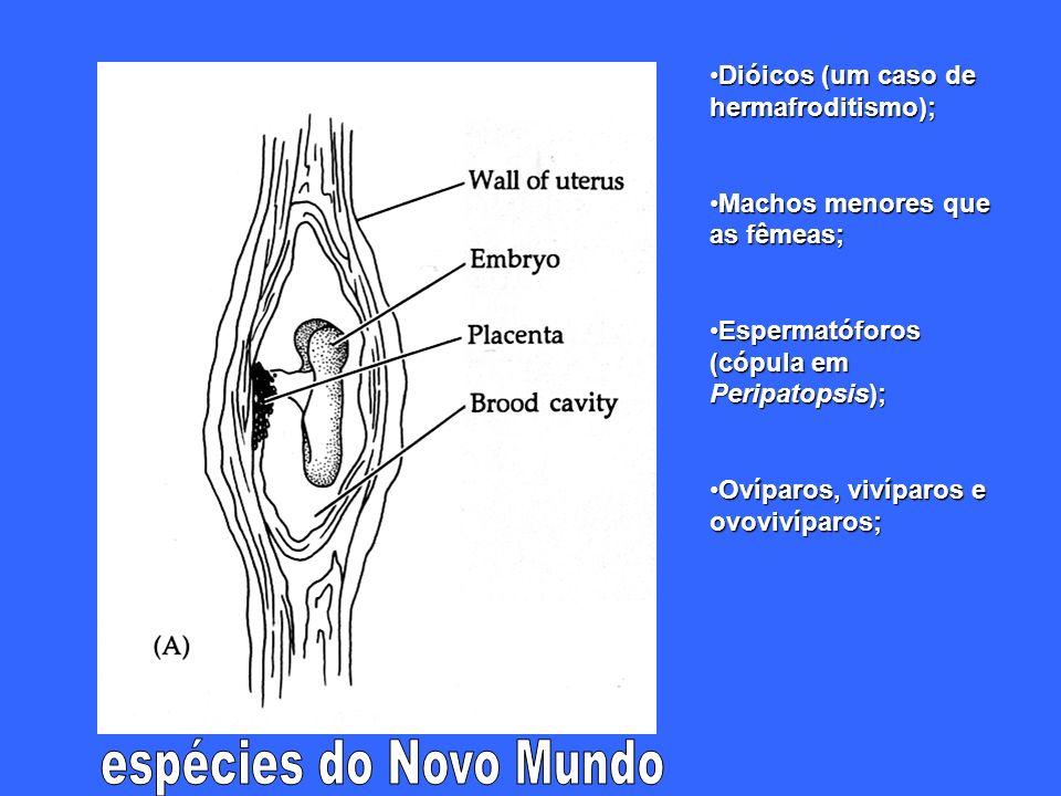 Dióicos (um caso de hermafroditismo);Dióicos (um caso de hermafroditismo); Machos menores que as fêmeas;Machos menores que as fêmeas; Espermatóforos (