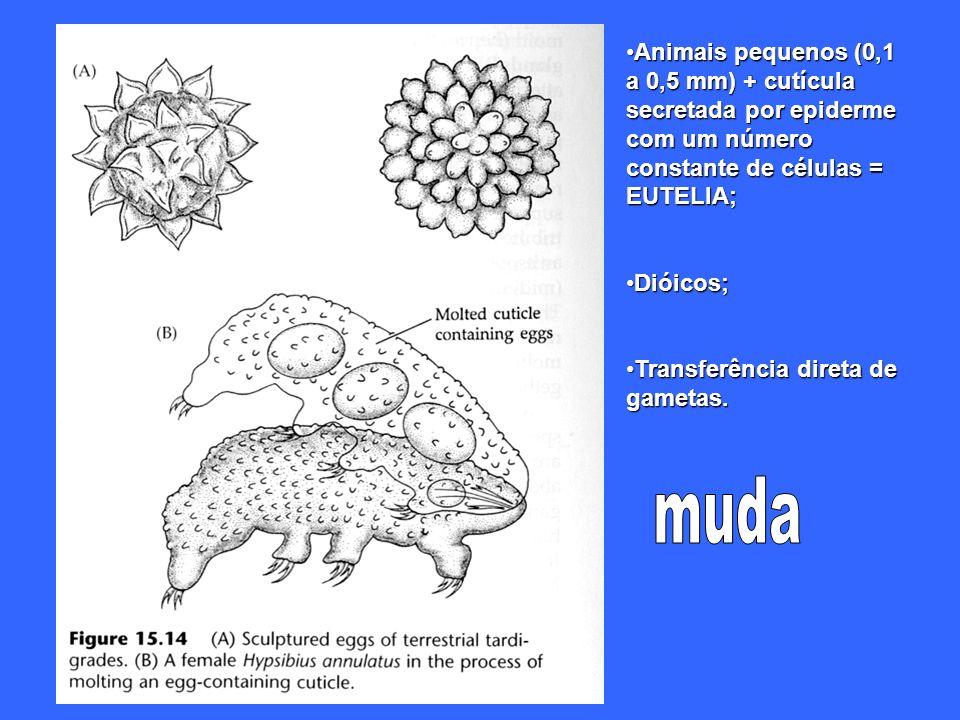 Animais pequenos (0,1 a 0,5 mm) + cutícula secretada por epiderme com um número constante de células = EUTELIA;Animais pequenos (0,1 a 0,5 mm) + cutíc