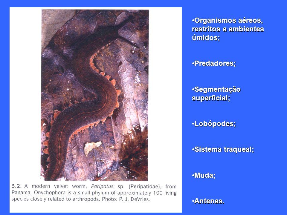 Organismos aéreos, restritos a ambientes úmidos;Organismos aéreos, restritos a ambientes úmidos; Predadores;Predadores; Segmentação superficial;Segmen