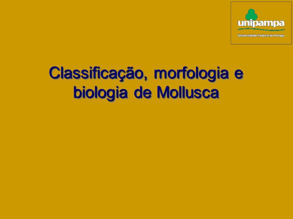 Classificação, morfologia e biologia de Mollusca Classificação, morfologia e biologia de Mollusca