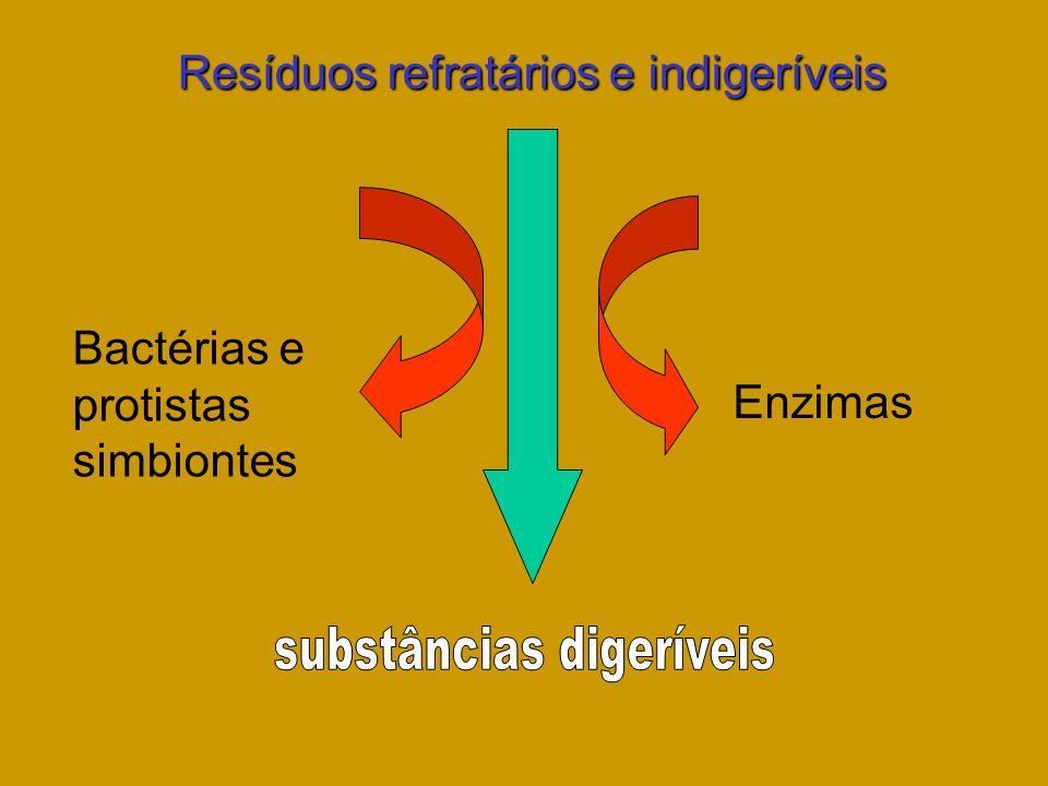 Bactérias e protistas simbiontes Enzimas