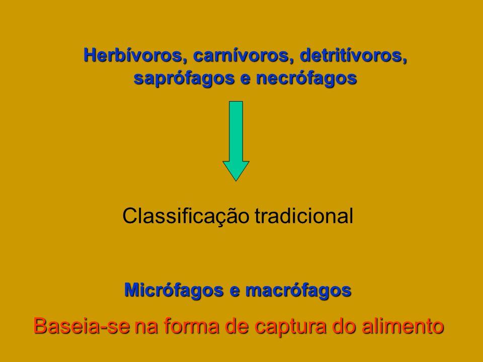 Herbívoros, carnívoros, detritívoros, saprófagos e necrófagos Classificação tradicional Micrófagos e macrófagos Baseia-se na forma de captura do alime