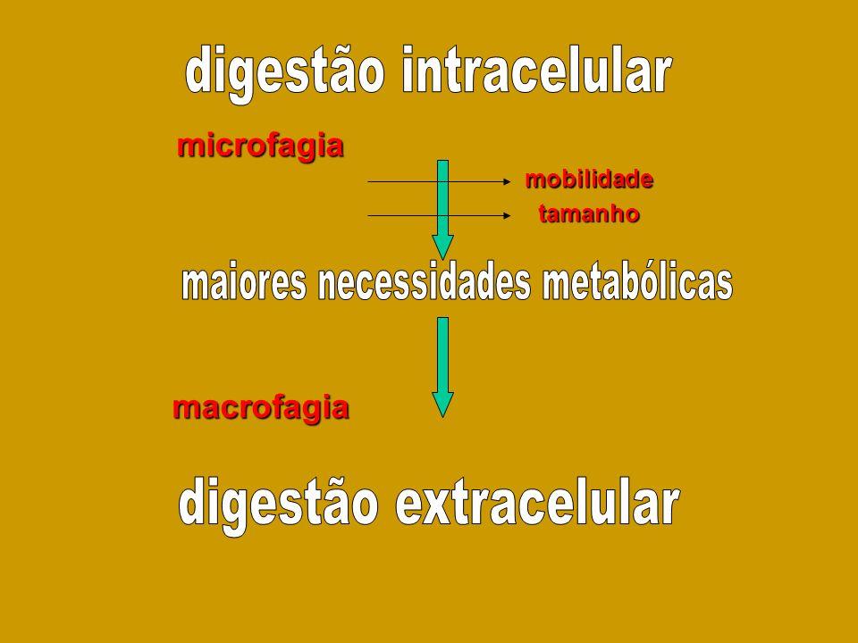 mobilidade tamanho macrofagia microfagia