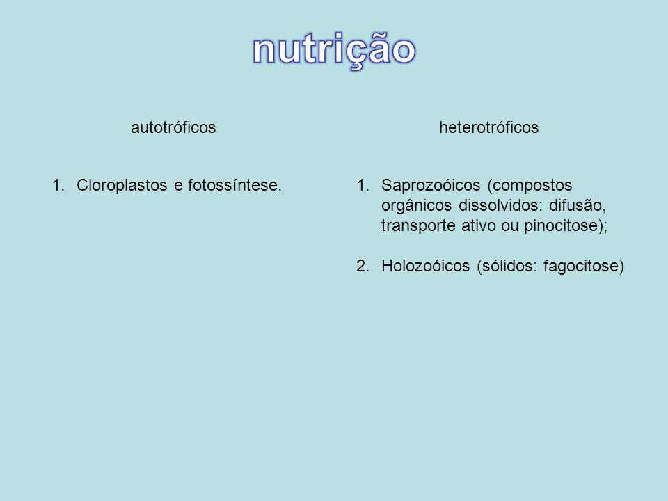 autotróficosheterotróficos 1.Saprozoóicos (compostos orgânicos dissolvidos: difusão, transporte ativo ou pinocitose); 2.Holozoóicos (sólidos: fagocito