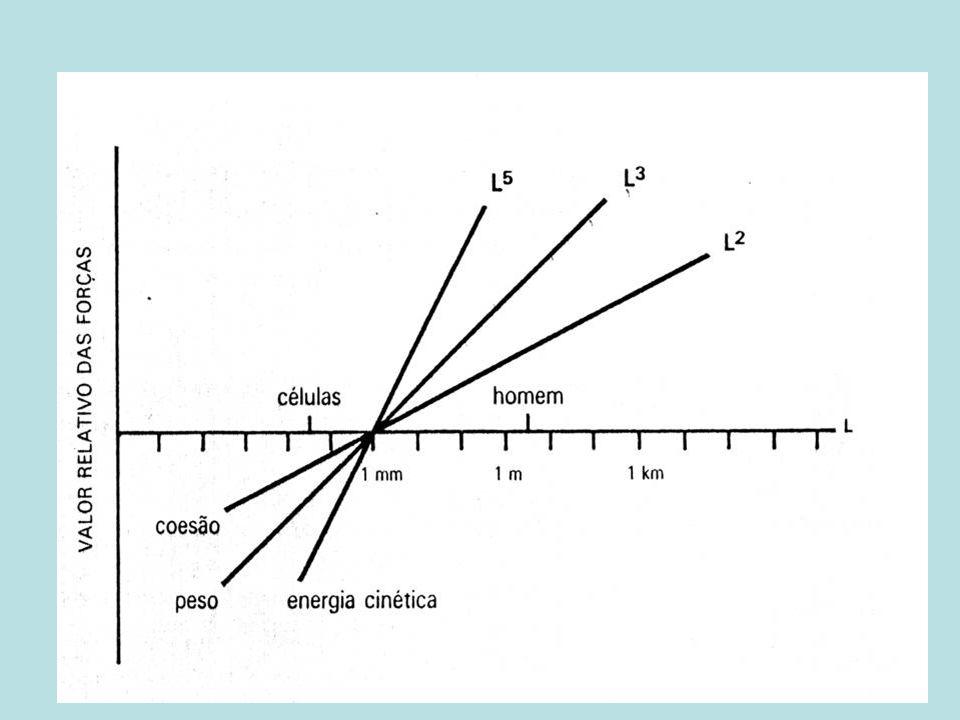 Reprodução assexuada 1.Fissão binária: única divisão mitótica; 2.Fissão múltipla: núcleo submete- se a múltiplas divisões: múltiplas células-filhas-plasmotomia e endopoliogenia em Apicomplexa; 3.Brotamento: plasmotomia.