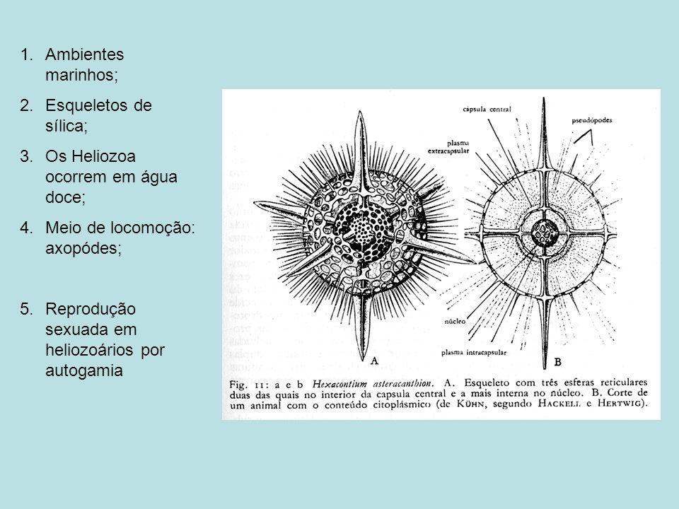 1.Ambientes marinhos; 2.Esqueletos de sílica; 3.Os Heliozoa ocorrem em água doce; 4.Meio de locomoção: axopódes; 5.Reprodução sexuada em heliozoários