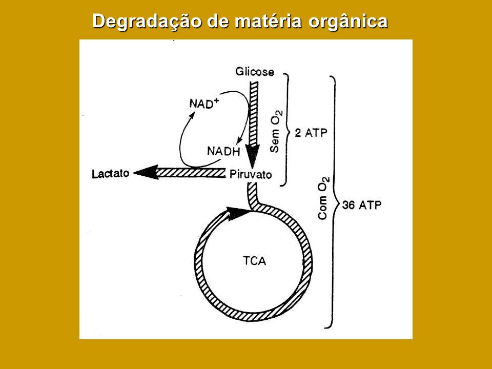 Degradação de matéria orgânica