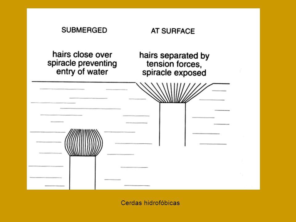 Cerdas hidrofóbicas