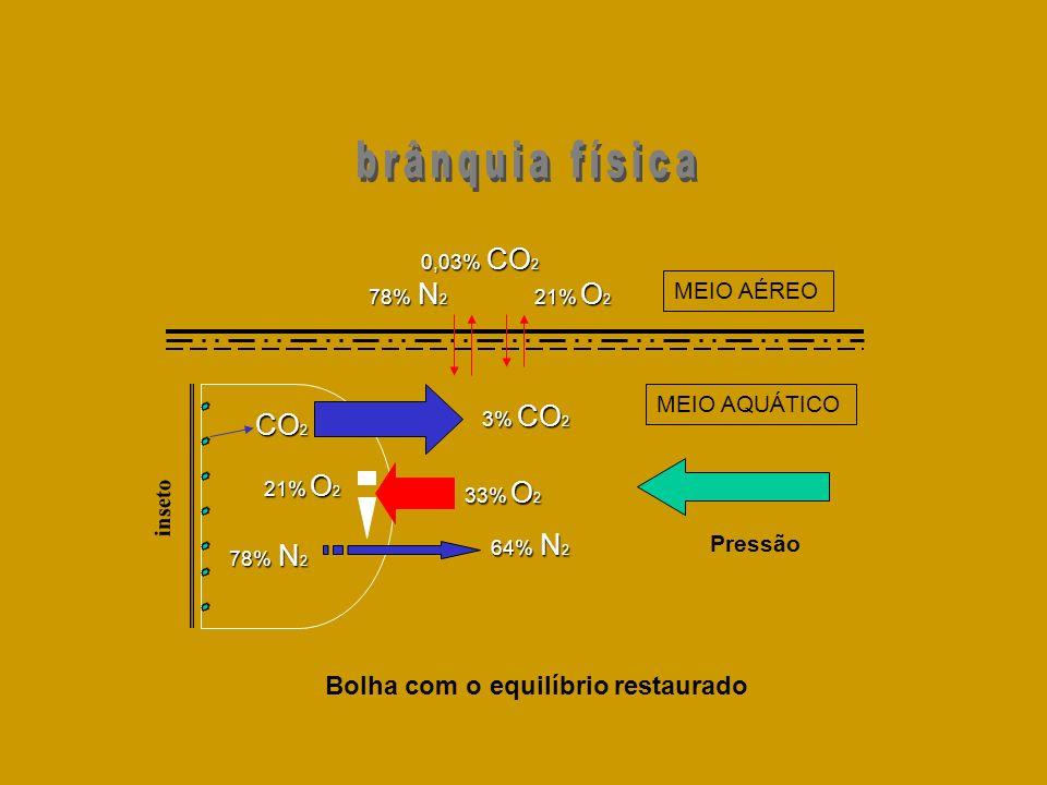 inseto 64% N 2 CO 2 78% N 2 3% CO 2 33% O 2 21% O 2 MEIO AQUÁTICO MEIO AÉREO Bolha com o equilíbrio restaurado 21% O 2 78% N 2 0,03% CO 2 Pressão