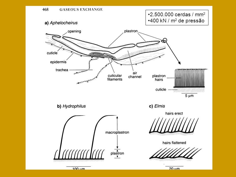 2.500.000 cerdas / mm 2 400 kN / m 2 de pressão