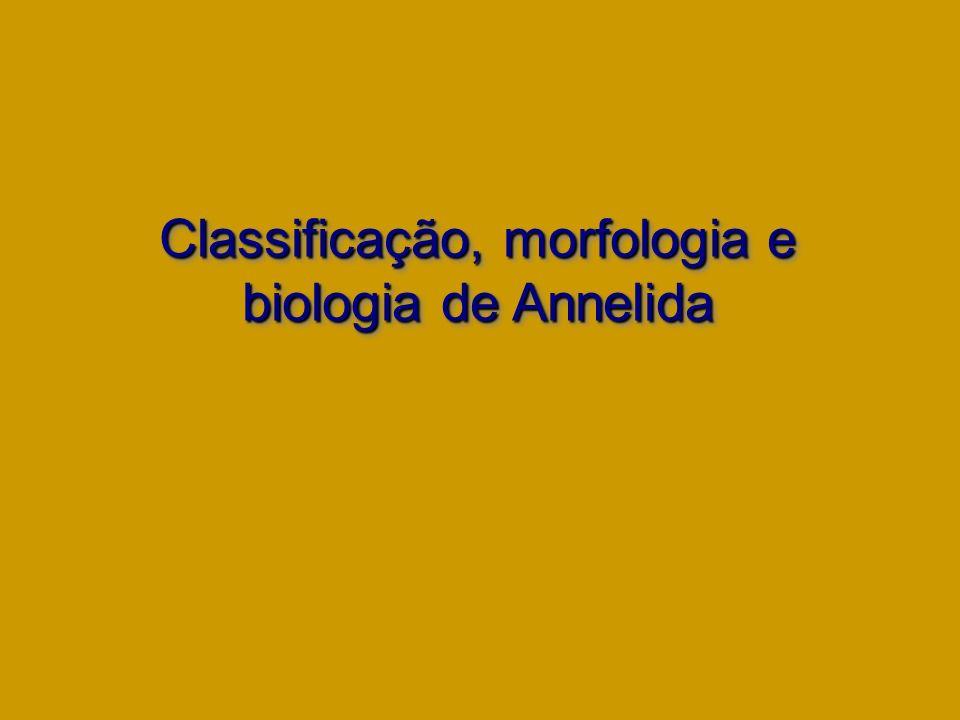 Classificação, morfologia e biologia de Annelida Classificação, morfologia e biologia de Annelida