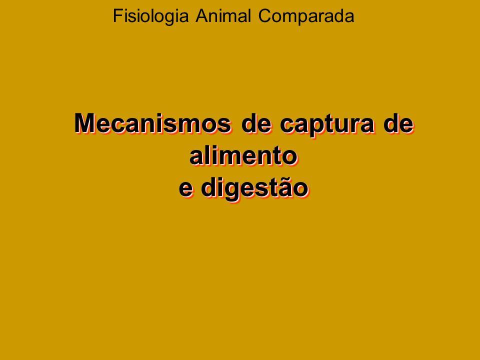 Fisiologia Animal Comparada Mecanismos de captura de alimento e digestão Mecanismos de captura de alimento e digestão