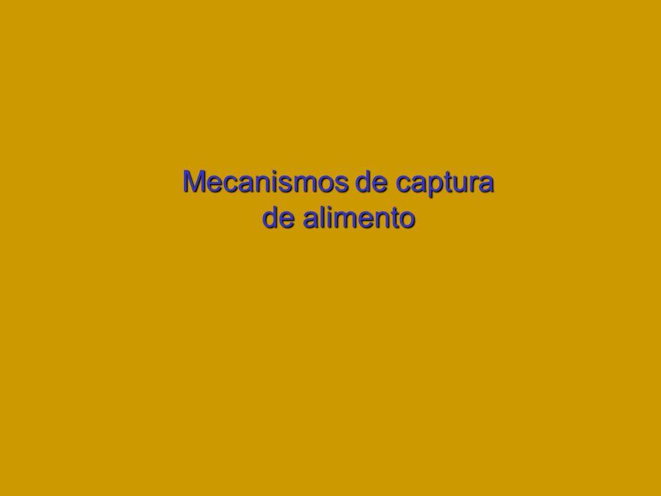 Mecanismos de captura de alimento