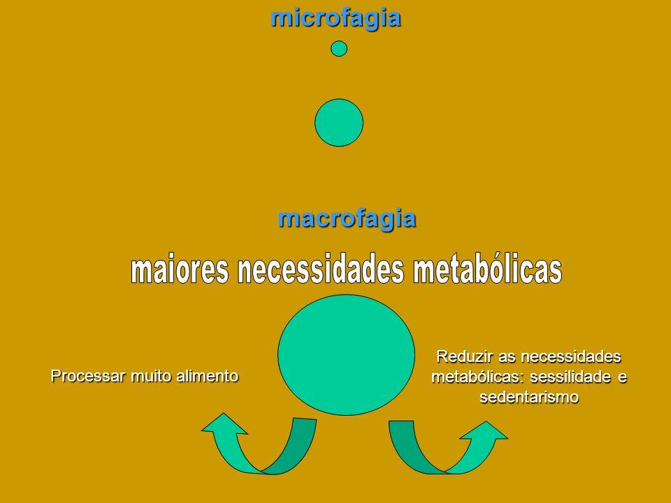 microfagia macrofagia Reduzir as necessidades metabólicas: sessilidade e sedentarismo Processar muito alimento