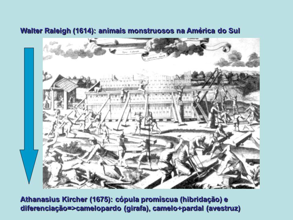 Walter Raleigh (1614): animais monstruosos na América do Sul Athanasius Kircher (1675): cópula promíscua (hibridação) e diferenciação=>camelopardo (gi