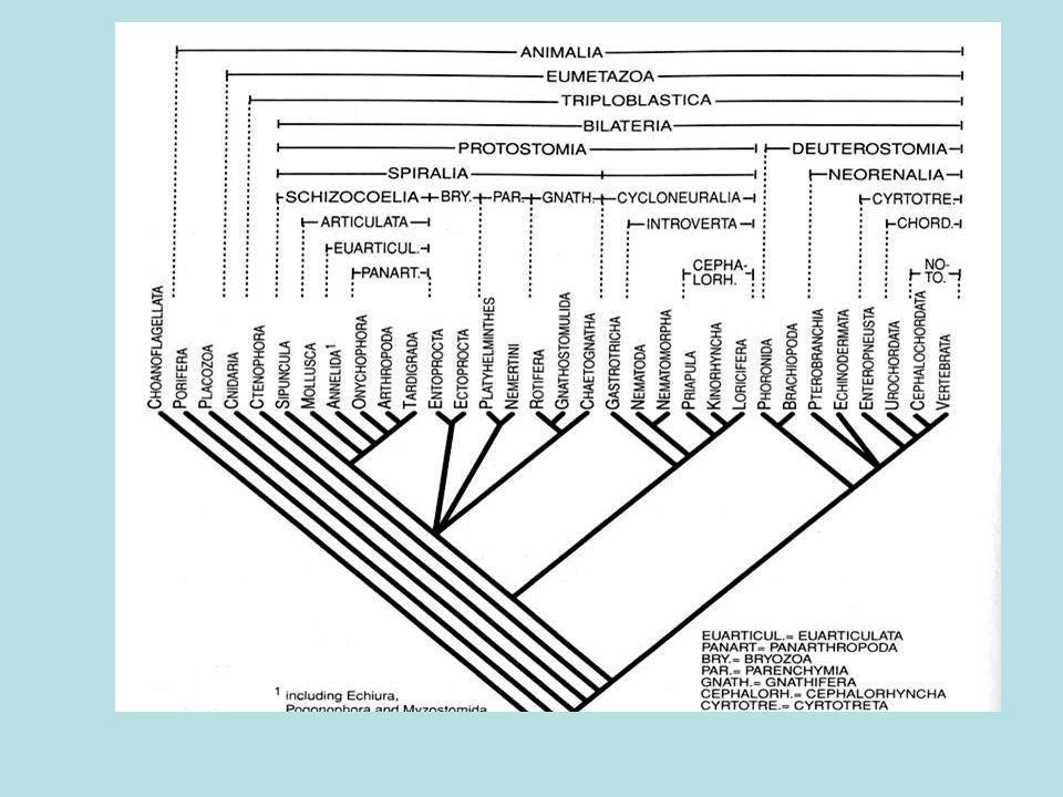 Haplodiploidia (Partenogênese arrenotóquica) RainhaRei Fêmeas 2n n b = 3/4 Machos n b = 1/2 Assimetria nos coeficientes de relacionamento genético (pré-disposição para o cuidado da prole) b=1/2 Pa + ½ Pb
