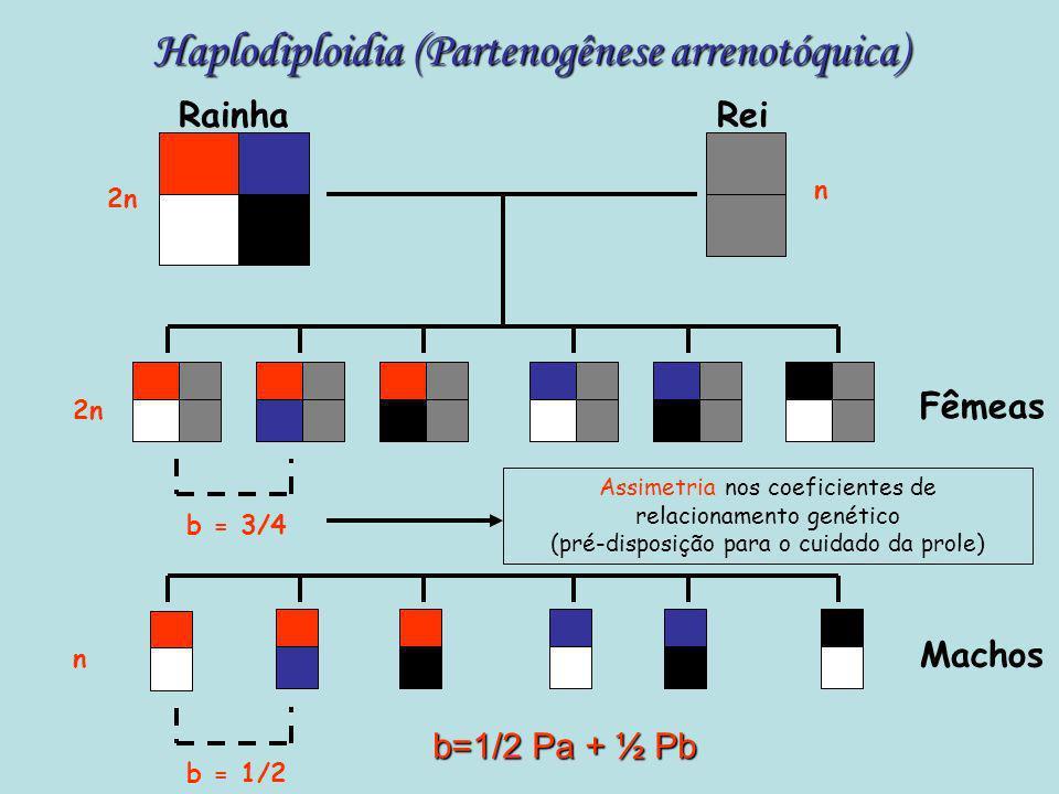 Endocruzamento RainhaRei 2n Rainha Rei b = 1/2