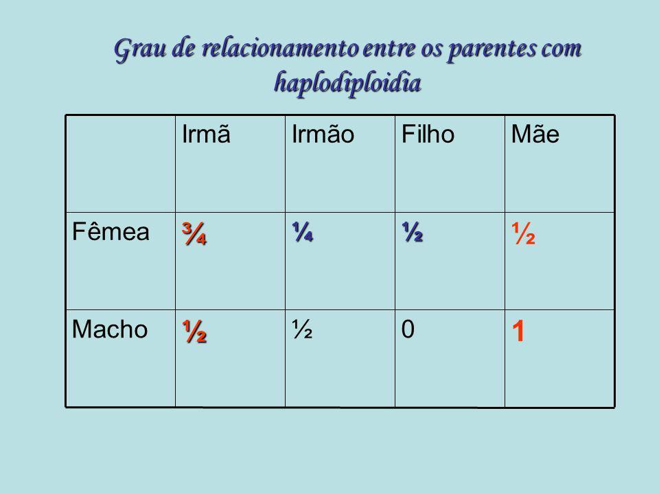 Haplodiploidia (Partenogênese arrenotóquica) RainhaRei Fêmeas 2n n b = 3/4 Machos n b = 1/2 Assimetria nos coeficientes de relacionamento genético (pr