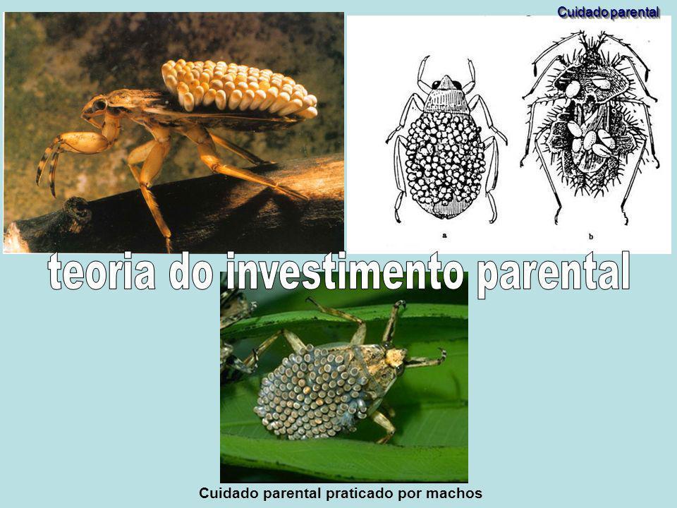 Cuidado parental praticado por fêmeas Cuidado parental