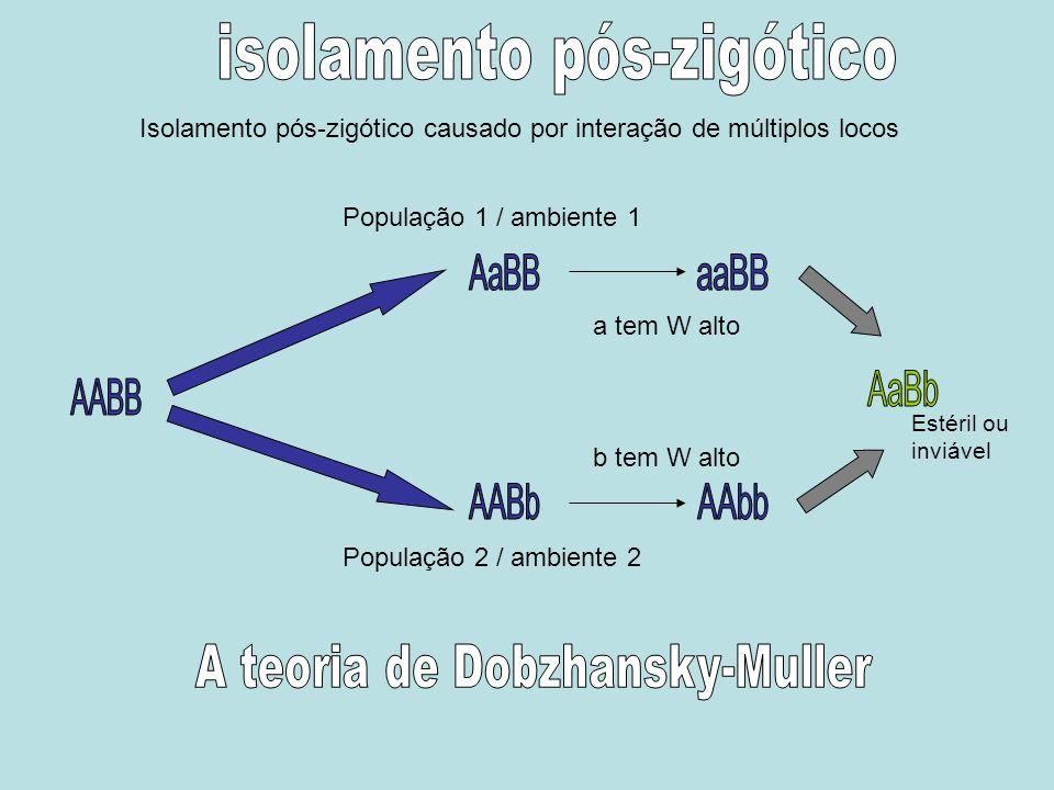 População 1 / ambiente 1 População 2 / ambiente 2 a tem W alto b tem W alto Estéril ou inviável Isolamento pós-zigótico causado por interação de múlti