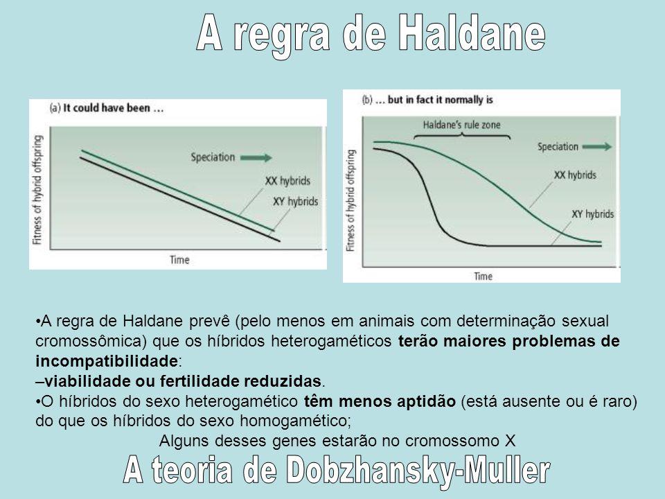 A regra de Haldane prevê (pelo menos em animais com determinação sexual cromossômica) que os híbridos heterogaméticos terão maiores problemas de incom
