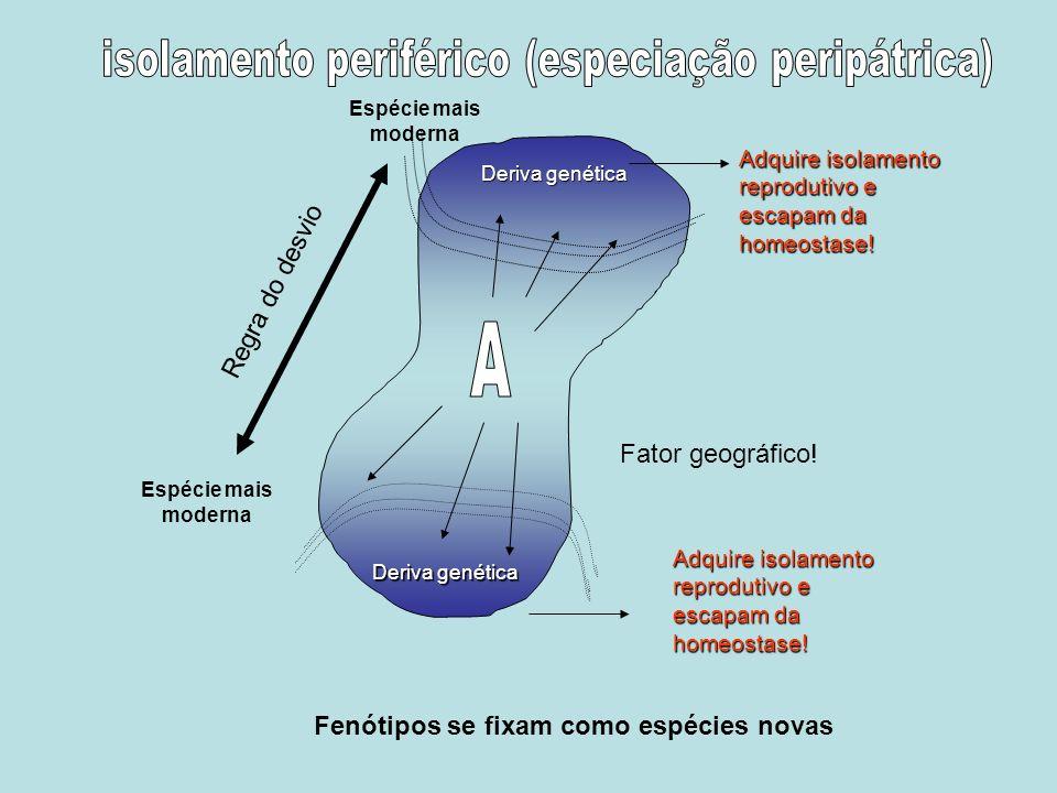 Adquire isolamento reprodutivo e escapam da homeostase! Fator geográfico! Adquire isolamento reprodutivo e escapam da homeostase! Fenótipos se fixam c