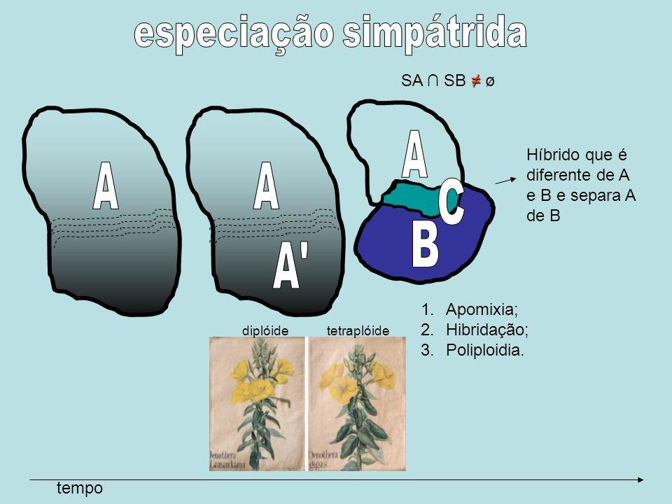 SA SB ø Híbrido que é diferente de A e B e separa A de B 1.Apomixia; 2.Hibridação; 3.Poliploidia. tempo diplóidetetraplóide