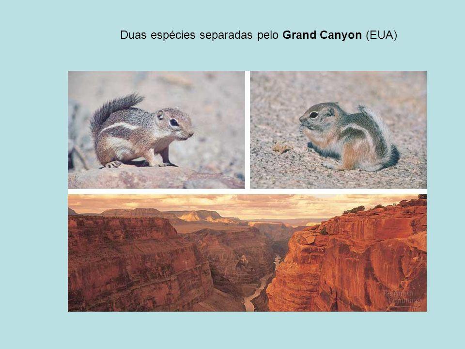 Duas espécies separadas pelo Grand Canyon (EUA)