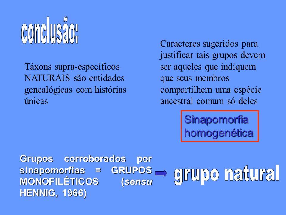 Táxons supra-específicos NATURAIS são entidades genealógicas com histórias únicas Caracteres sugeridos para justificar tais grupos devem ser aqueles que indiquem que seus membros compartilhem uma espécie ancestral comum só deles Sinapomorfiahomogenética Grupos corroborados por sinapomorfias = GRUPOS MONOFILÉTICOS (sensu HENNIG, 1966)