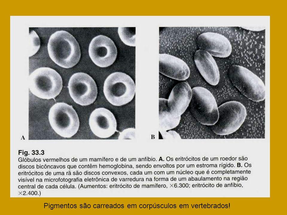 Pigmentos são carreados em corpúsculos em vertebrados!