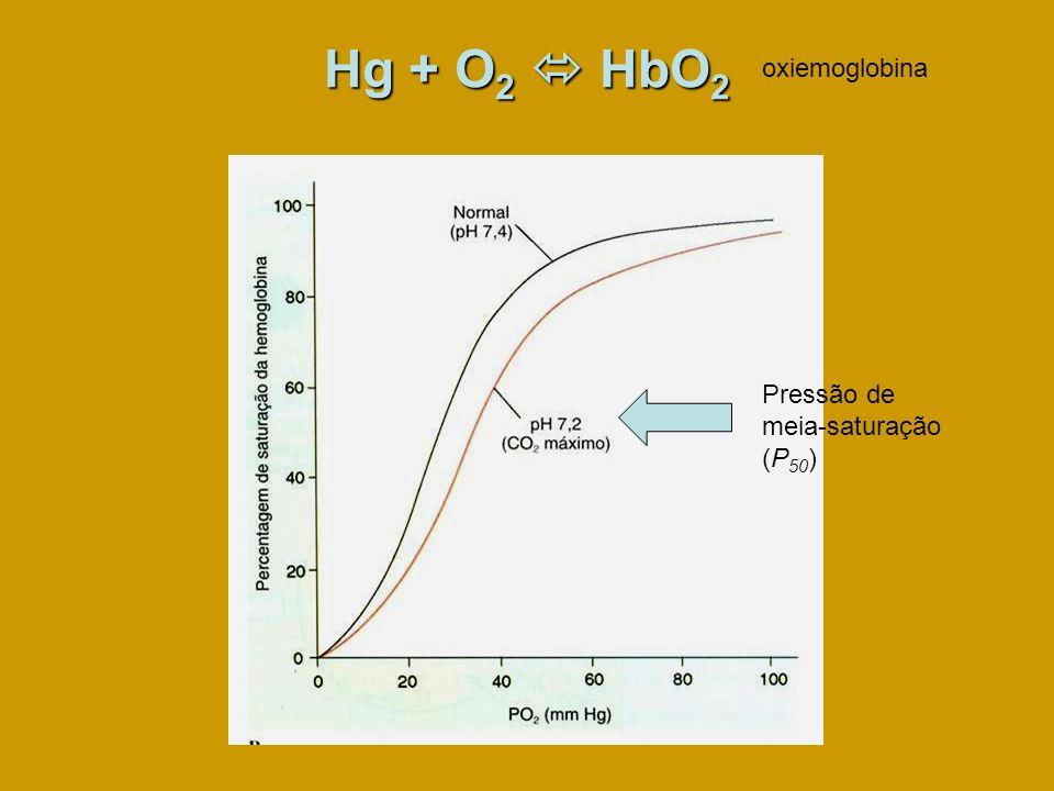 Hg + O 2 HbO 2 oxiemoglobina Pressão de meia-saturação (P 50 )