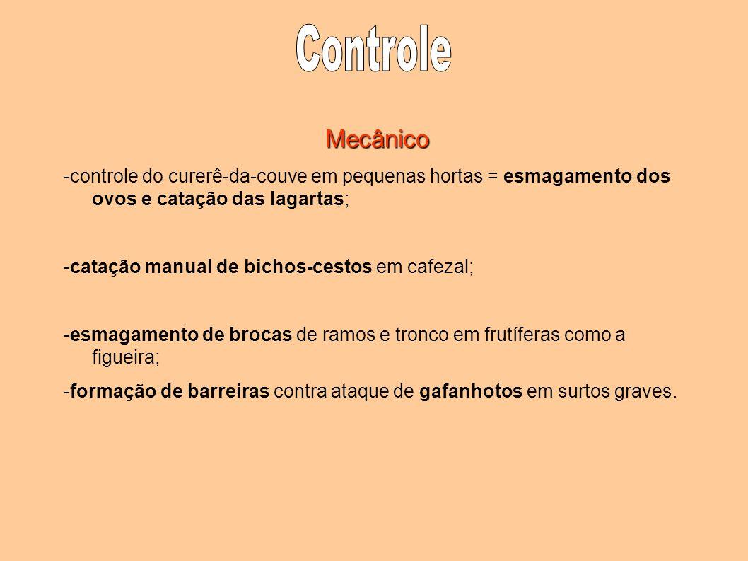 Mecânico -controle do curerê-da-couve em pequenas hortas = esmagamento dos ovos e catação das lagartas; -catação manual de bichos-cestos em cafezal; -