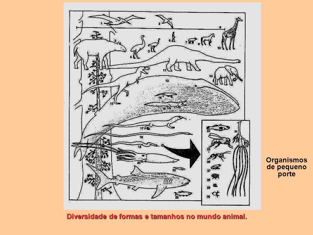 Diversidade de formas e tamanhos no mundo animal. Organismos de pequeno porte