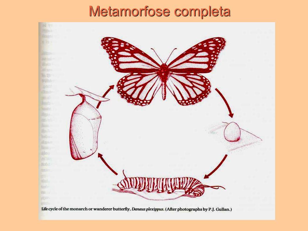 Metamorfose completa