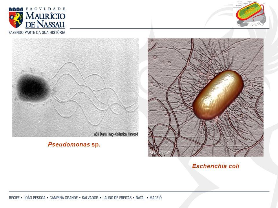 Pseudomonas sp. Escherichia coli
