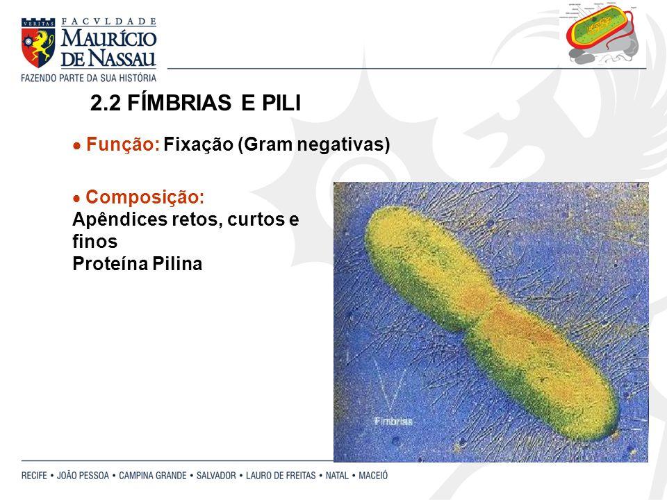 2.2 FÍMBRIAS E PILI Composição: Apêndices retos, curtos e finos Proteína Pilina Função: Fixação (Gram negativas)