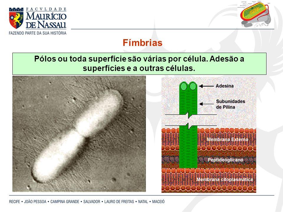Pólos ou toda superfície são várias por célula. Adesão a superfícies e a outras células. Fímbrias