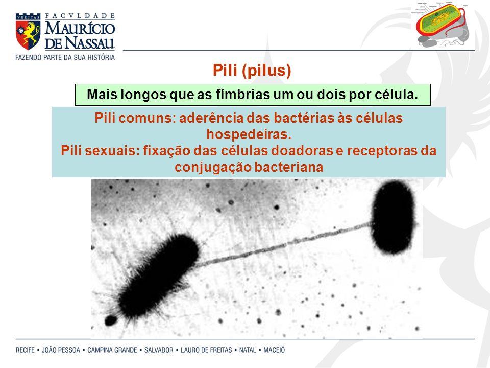 Mais longos que as fímbrias um ou dois por célula. Pili (pilus) Pili comuns: aderência das bactérias às células hospedeiras. Pili sexuais: fixação das