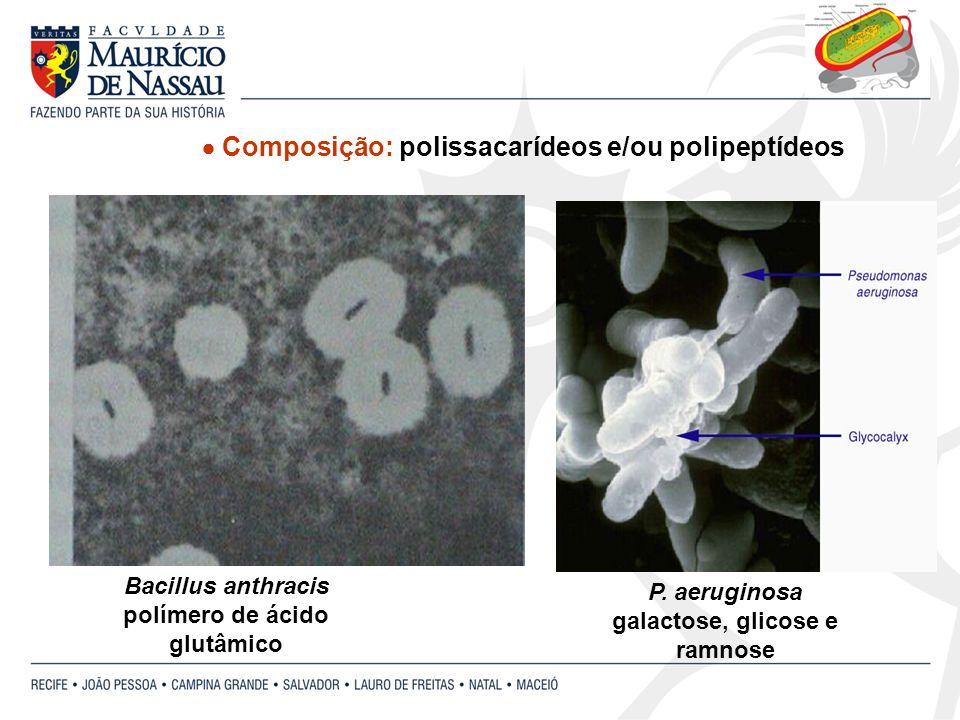 P. aeruginosa galactose, glicose e ramnose Composição: polissacarídeos e/ou polipeptídeos Bacillus anthracis polímero de ácido glutâmico