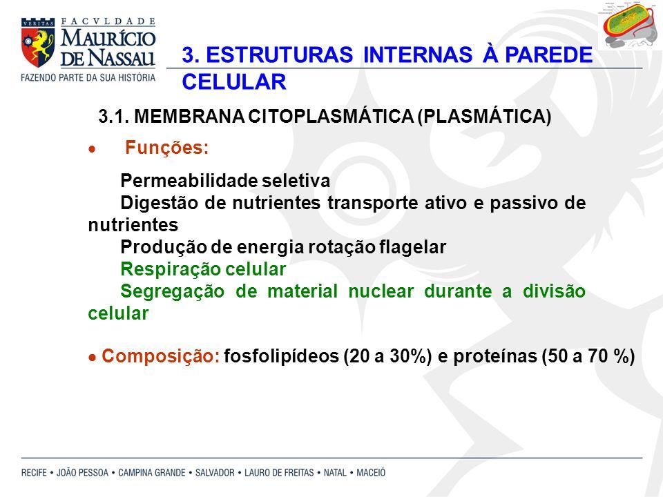 3. ESTRUTURAS INTERNAS À PAREDE CELULAR 3.1. MEMBRANA CITOPLASMÁTICA (PLASMÁTICA) Funções: Permeabilidade seletiva Digestão de nutrientes transporte a
